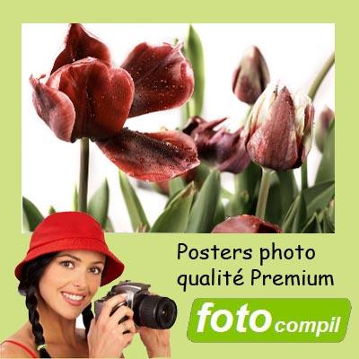 Poster 80x80 Premium Mat